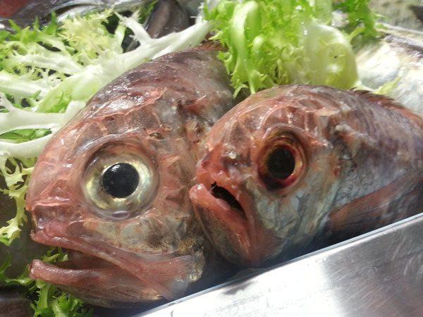 Pesce accendino