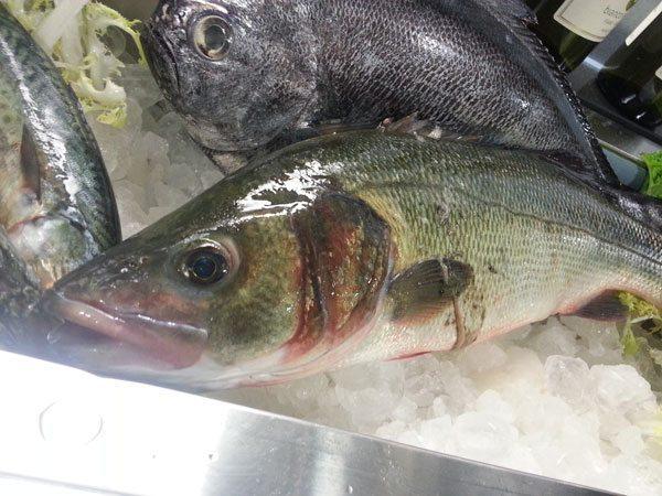 Spigola di mare e pesce castagna