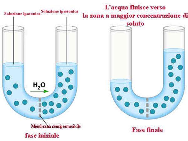 Della marinatura ossia l osmosi e viceversa di testa e for Materiale del tubo della linea d acqua