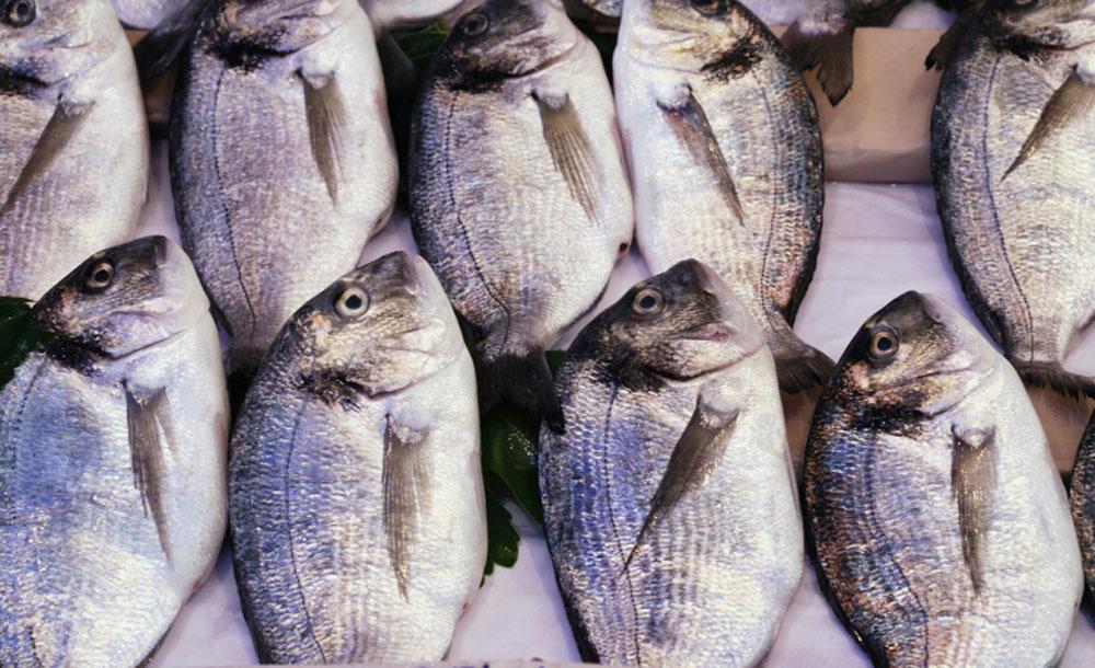 Pesce fresco o congelato?