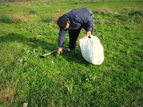 La-raccolta-delle-erbe-spontanee