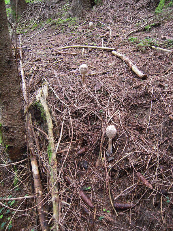 tre-funghi-chiusi