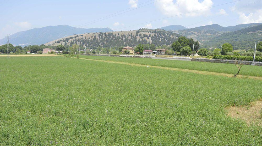 agricoltura-ridotta