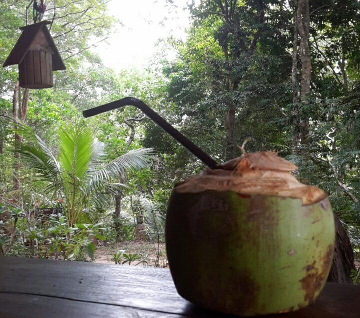 cocco coconut