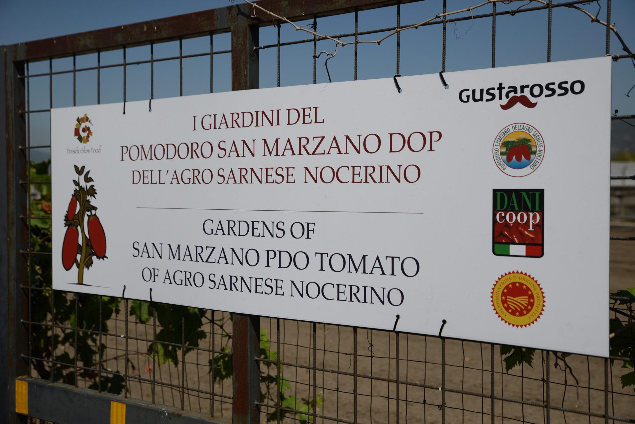 Penny Lane Pomodoro San Marzano Day Vessicchio