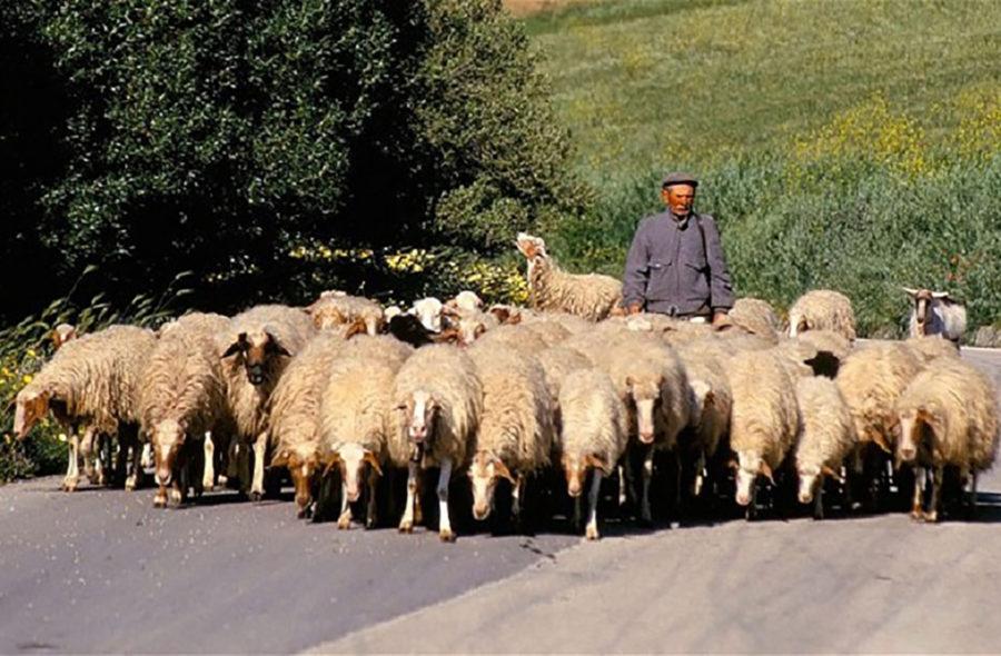 Pastorizia sarda