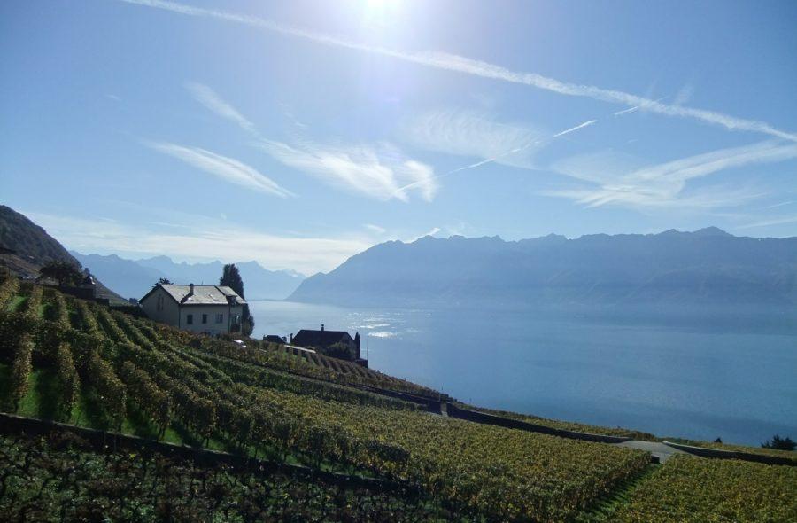 svizzera vigna