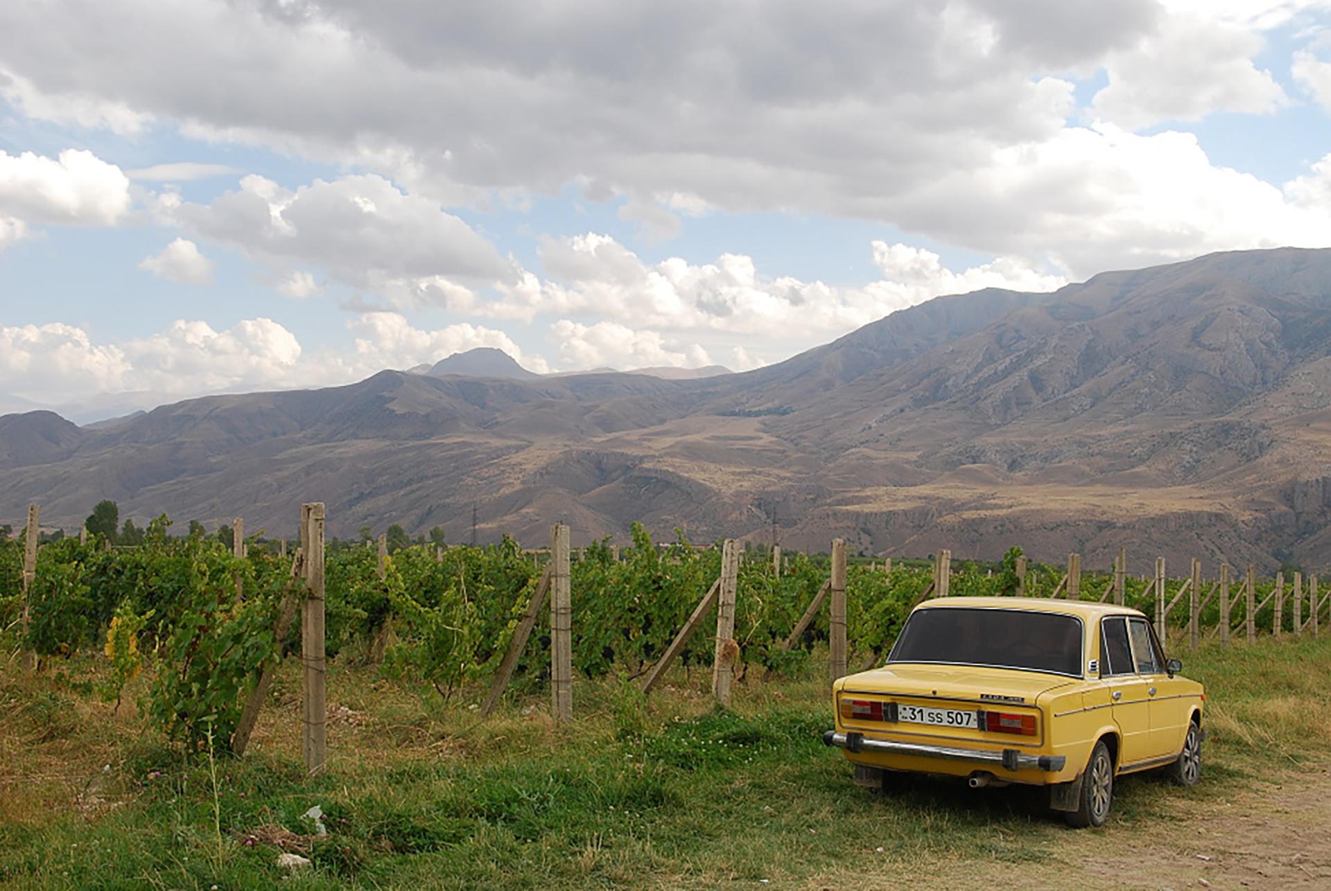 Vigne in provincia di Vayots Dzor